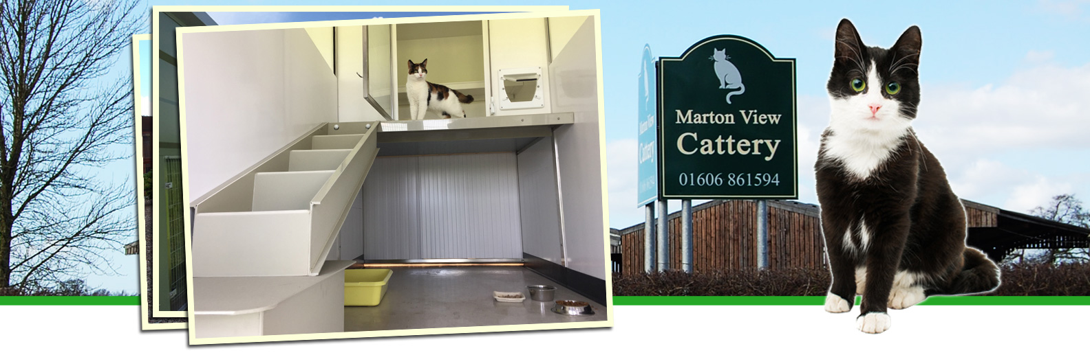 marton view cattery cheshire